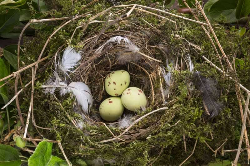 how to know if a bird egg is alive