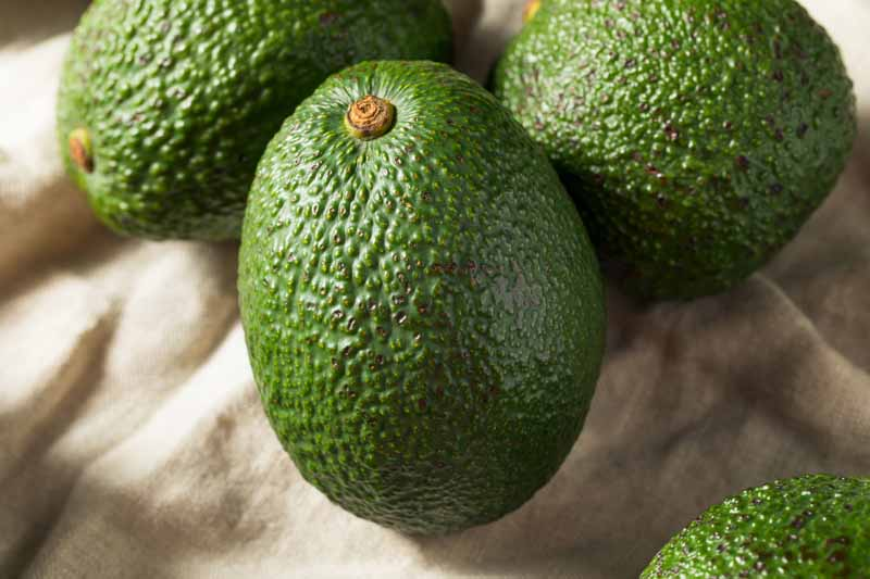 Can-You-Eat-Unripe-Avocado