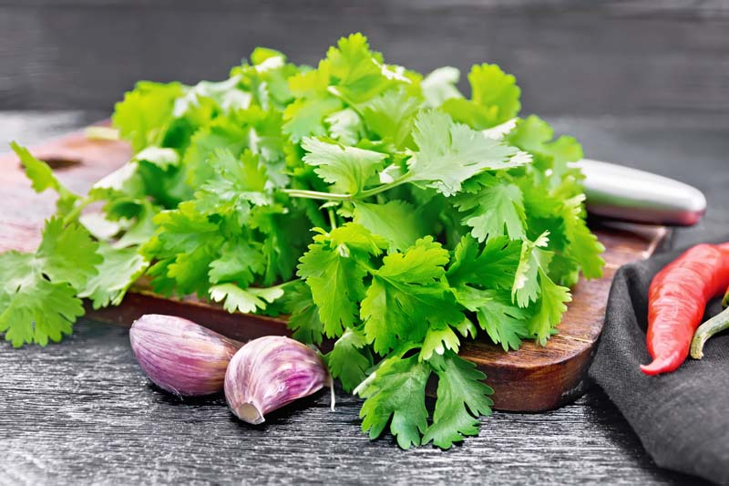 Difference Between Cilantro and Culantro