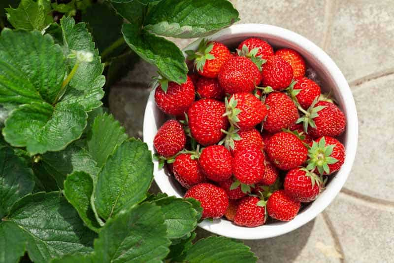 Eat the Leaves of Strawberries