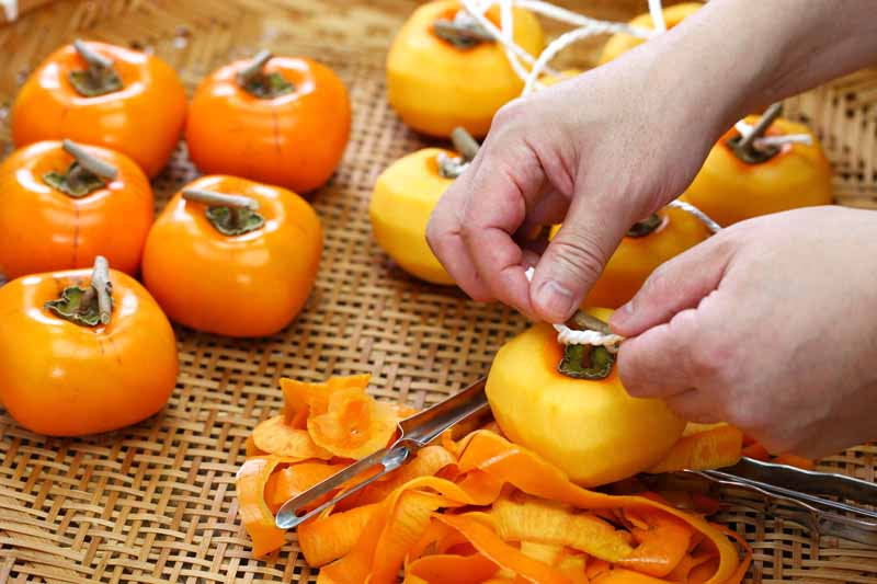 Eat the Skin on A Persimmon