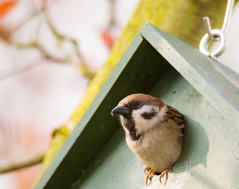 How-Did-a-Bird-Get-in-My-House