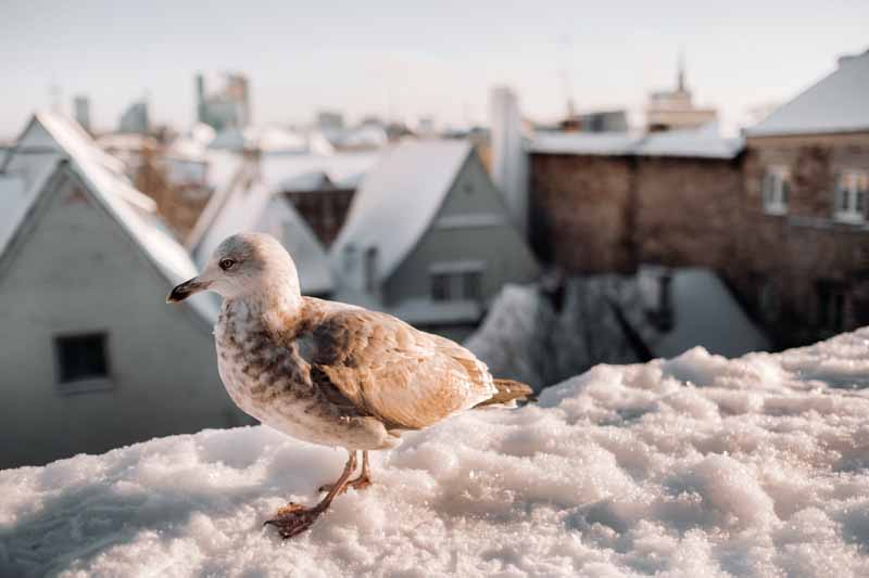 How-Long-for-A-Bird-Stuck-in-Chimney-to-Die