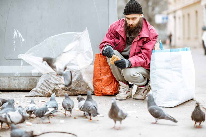 What-Do-Pigeons-Eat-in-The-City
