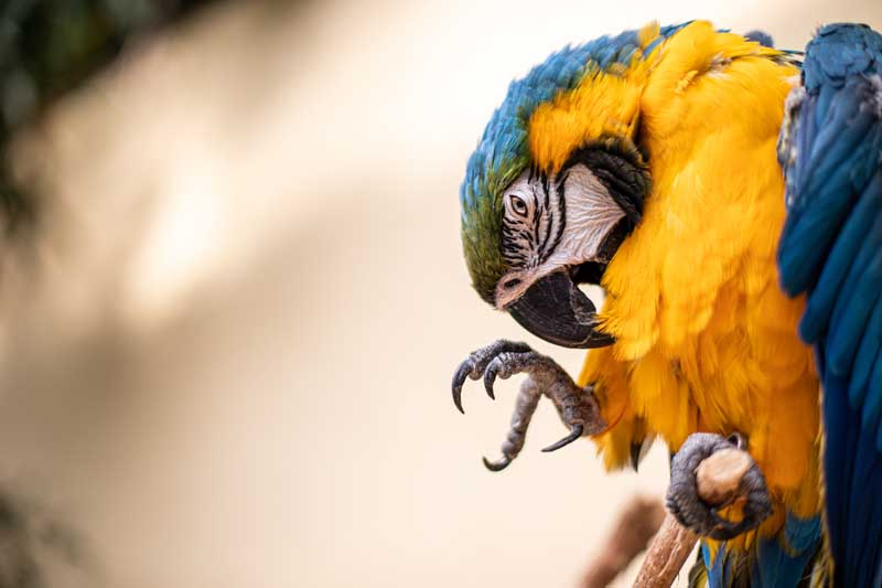 Birds Puff Up Their Feathers