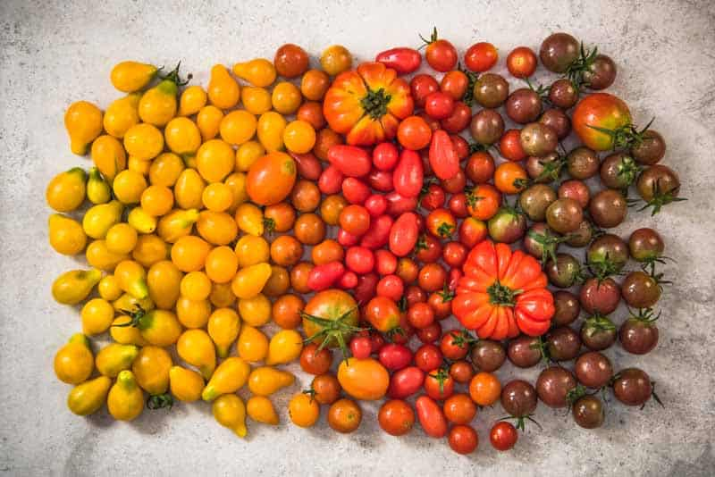 colorful-gamma-of-tomatoes-min