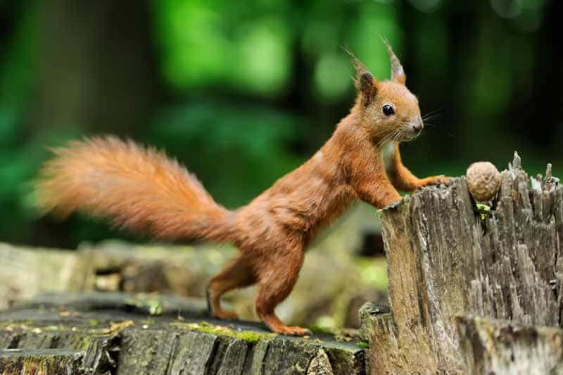 squirrel-with-nuts