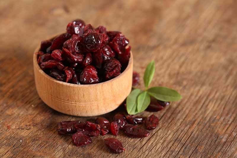 Can Birds Eat Dried Cranberries
