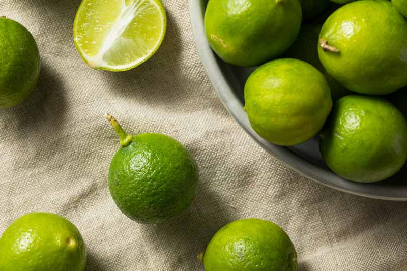 Difference Between Key Lime And Lime