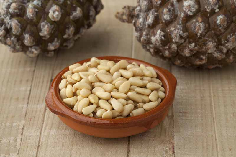 bowl-with-pine-nuts